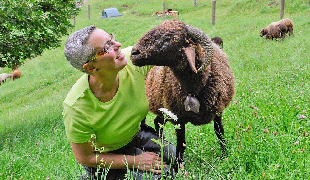 Schafe Halten Und Zuchten Prospecierara